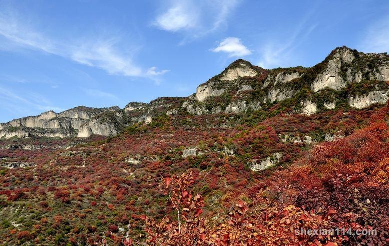 涉县庄子岭黄栌树万山红遍 红叶令人流连忘返